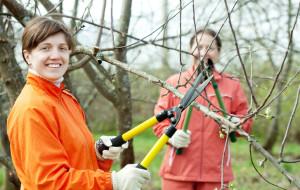 Ogród. Czas przycinania drzew owocowych