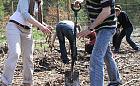 Możesz wskazać miejsca, gdzie posadzić nowe drzewa