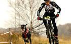 Ostatnie zawody psich zaprzęgów w sezonie
