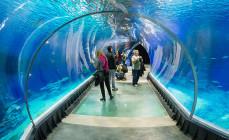 Jest chętny do budowy oceanarium w Trójmieście