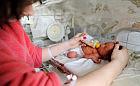 Koniec z cesarkami na życzenie? Ministerstwo chce powrotu do porodów siłami natury