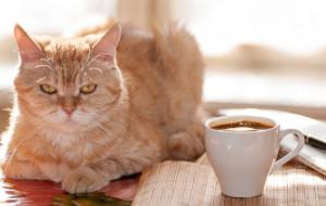 Dwie kocie kawiarnie w Trójmieście
