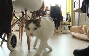 Trójmiejskie kocie kawiarnie są już czynne