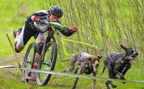 Wyścigi Bikejoringu i XC za nami