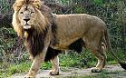 Bilety do zoo także przez internet