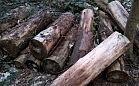 Porzucone drewno w lesie na Obłużu przeszkadza mieszkańcom