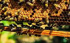 Studenci PG znaleźli sposób na hodowlę pszczół