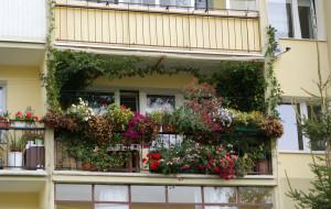 Konkurs. Najpiękniejszy gdański balkon lub przedogródek