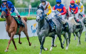 Wyścigi konne, festyn i zakłady na hipodromie