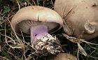 Patent na bezpieczne grzybobranie