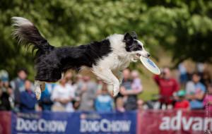 Zobacz latających psich sportowców