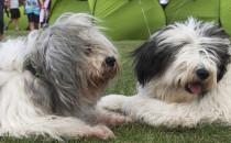 Tysiące rasowych psów na sopockim hipodromie