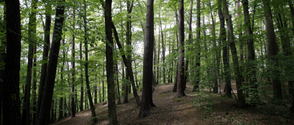 Udaremniono próbę samobójczą w Sopocie