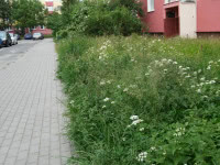 Opryski trawy  zaszkodziły psom na Dąbrowie