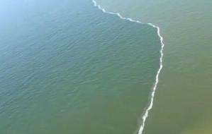Wyjątkowe zjawisko u brzegów Wyspy Sobieszewskiej