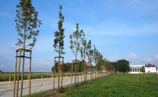 Jesienią Gdynia zyska 500 nowych drzew