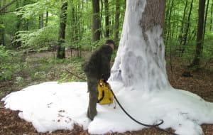 Ktoś podpala drzewa w oliwskich lasach