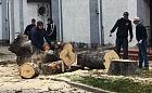 Stare drzewa wycięto, ale będą nowe przy kościele w Brzeźnie
