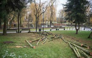 Wycinka. O usunięciu drzewa na terenach zabytkowych decyduje konserwator