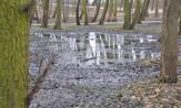 Skąd podwyższony stan wód w Parku Brzeźnieńskim?