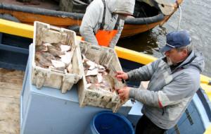 Naukowcy zbadali wpływ dawnej broni w Bałtyku na zdrowie ryb