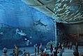Mniej niż 40 zł za bilet do oceanarium w Gdańsku