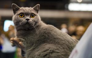 Kocie porady: obalamy trzy najsłynniejsze mity o kotach
