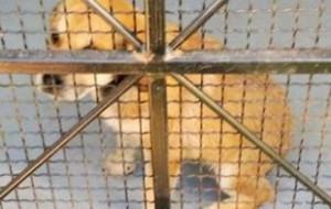 Uratowała szczeniaka dryfującego w Raduni