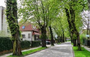 Gdynia: nowe kasztanowce w miejsce wyciętych