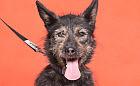 Adopcje zwierzaków: pokochaj i przygarnij Ulę