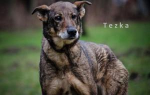 Seniorka Tezka: niech spędzi jesień życia w domu, a nie schronisku