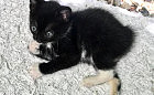 Zbierają fundusze na małą niepełnosprawną kotkę