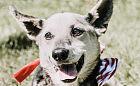 Akcja dla psich seniorów z Ciapkowa