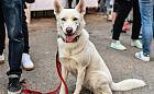 Cztery łapy: chory pies ma zawsze suchy nos? Obalamy psie mity