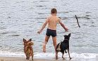 Propozycja: prysznic dla psów przy plaży w Brzeźnie