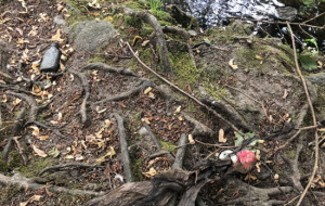 Park Oliwski: stare śmieci zniechęcają do spacerów