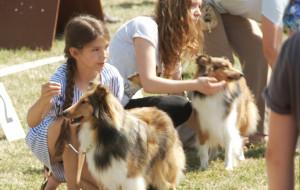 Rasowe psy w parku w Kolibkach