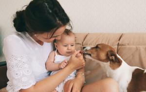 Cztery łapy: pies a narodziny dziecka