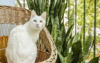Kot na balkonie. Czy zawsze bezpieczny?