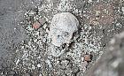 Szkielety ze starego cmentarza przy kościele św. Piotra i Pawła