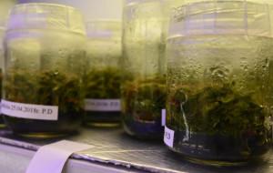 Krem z bursztynu, świece bez toksyn. Innowacyjne badania młodych naukowców
