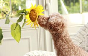 Rośliny trujące dla psa i kota. Na co uważać?