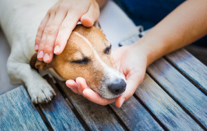 Pierwsza pomoc dla psa. Co robić w razie wypadku?