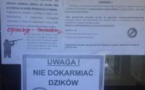 Kontrowersje wokół odstrzału dzików w Sopocie