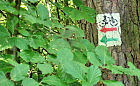 Skok w naturę w okolicach Nowej Karczmy