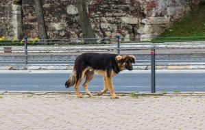Zaginął pies - co robić? Krok po kroku