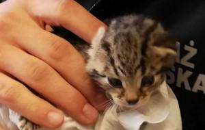 Strażnicy szukają domu dla kotków
