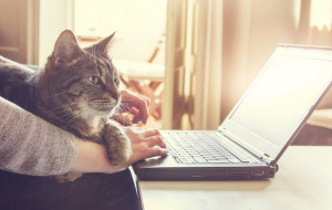 Miłość warta miliony. Jak gdańszczanie wspierają koty