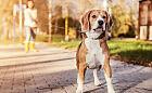 Co zrobić, gdy poturbuje nas pies?