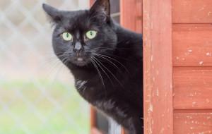 Mruczka: czarna kocia dama gaśnie w schronisku